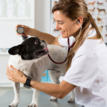 Nearby Veterinary Hospitals
